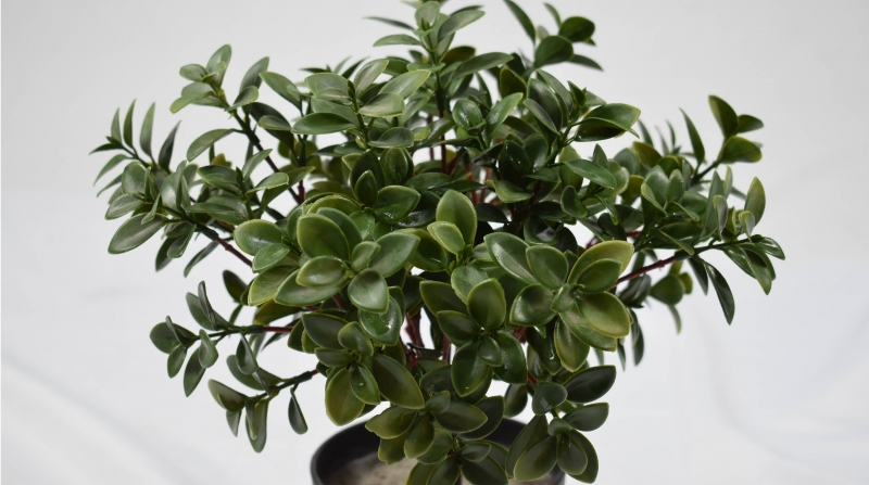 Why are artificial potted plants so popular?
