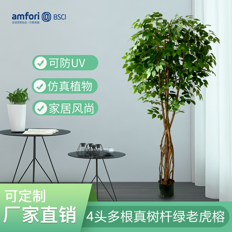 7-foot-4 multi-rooted green tiger ficus