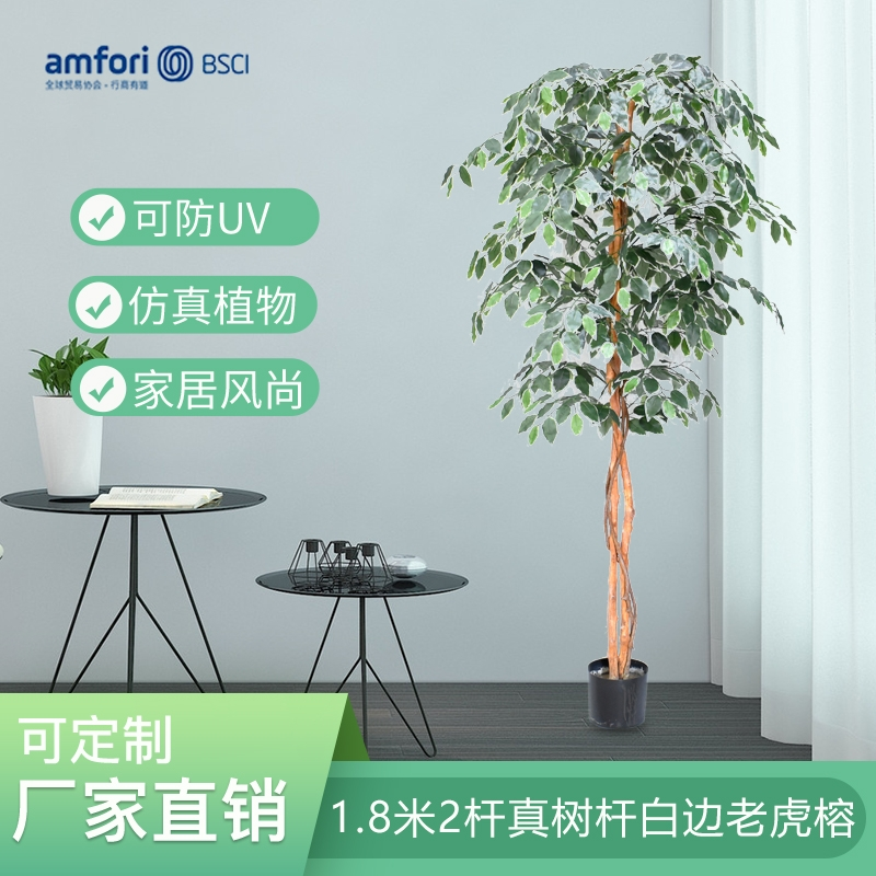 1.8m 2 real tree pole white edge tiger ficus